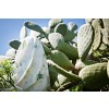 Poofi Πάνα Αγκαλιάς από Μπαμπού 73x73εκ Cactus